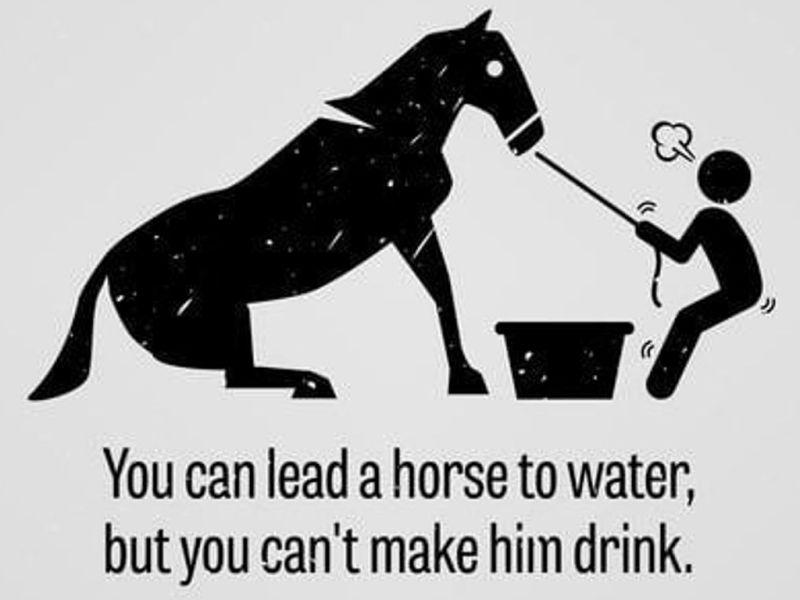 puedes llevar un caballo al agua pero no puedes obligarlo a beber